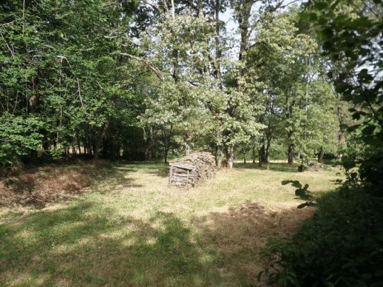Woods/Garden