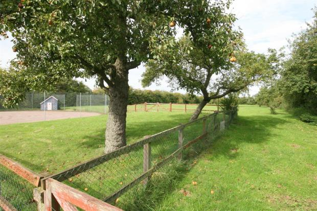 Orchard and Paddock