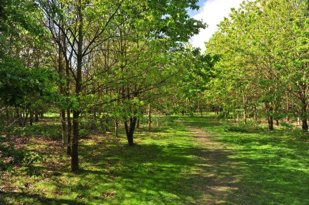 Poringland Woods