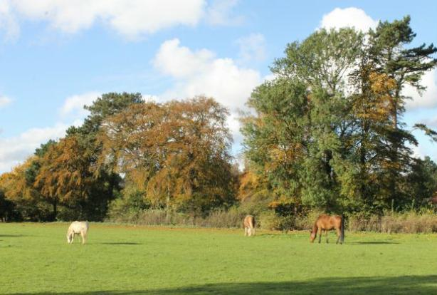 View from Garden Over Adjoining Paddock