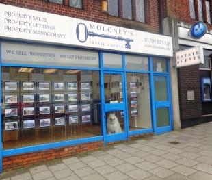 Moloney's Estate Agents , Cuffleybranch details