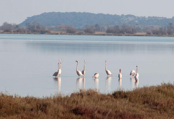 Flamingos Etaing