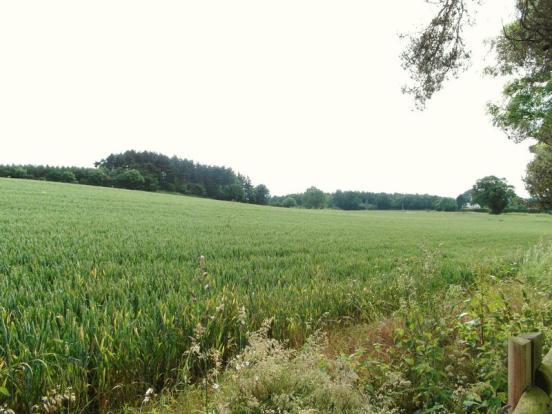 Views over fields