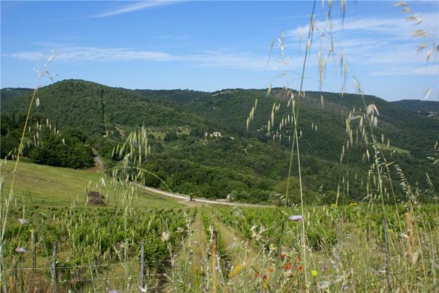Chianti Views