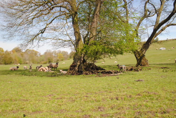 Meadow land
