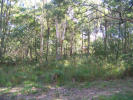 property for sale in 5 Eyre, RUSSELL ISLAND 4184