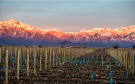 Farm Land in Vines of Mendoza for sale