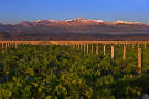 Vines of Mendoza Private Vineyards Argentina