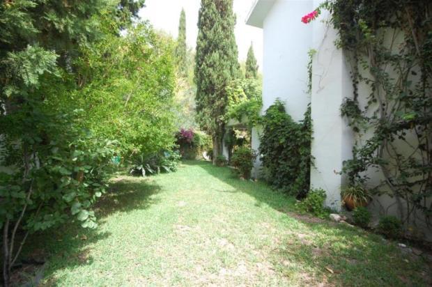 Level garden has olive, lemon, fig tree & more