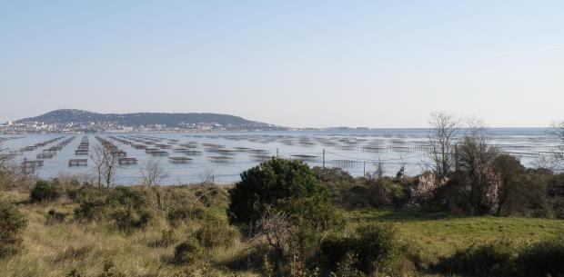 Thau Lagoon