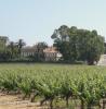 St Tropez vineyards