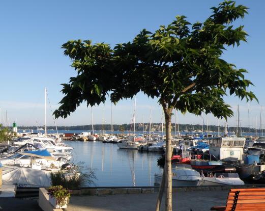 Mouré Rouge port