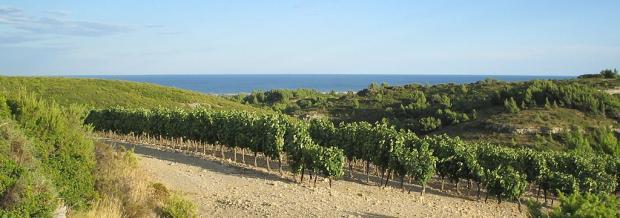 Vineyards in LaClape