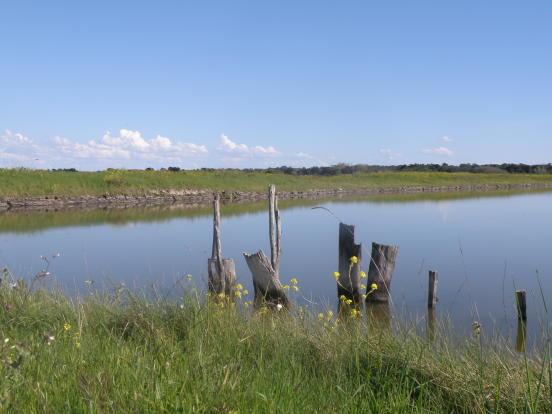 Ile de Ré landscape