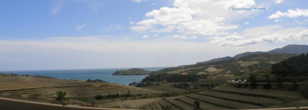 Collioure Vineyards