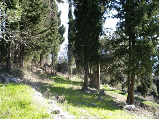 land and cypress trees