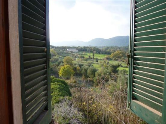 view through the shutters