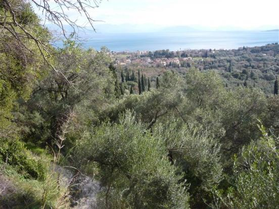 Land in Agios Markos with sea view