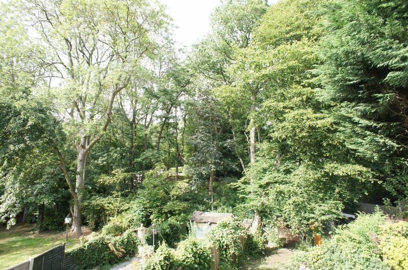 Woodland Views