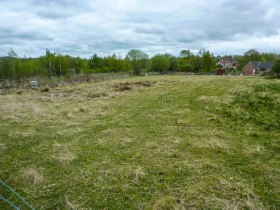 Witton Park Plots (3)