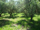 property for sale in Acharavi, Corfu, Ionian Islands