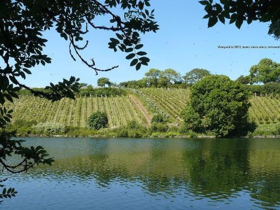 Vineyard in 2012
