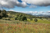 Farm Land in Andalusia, M�laga, Ronda