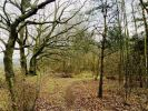Nettleton Wood- 25 Acres (est) Land