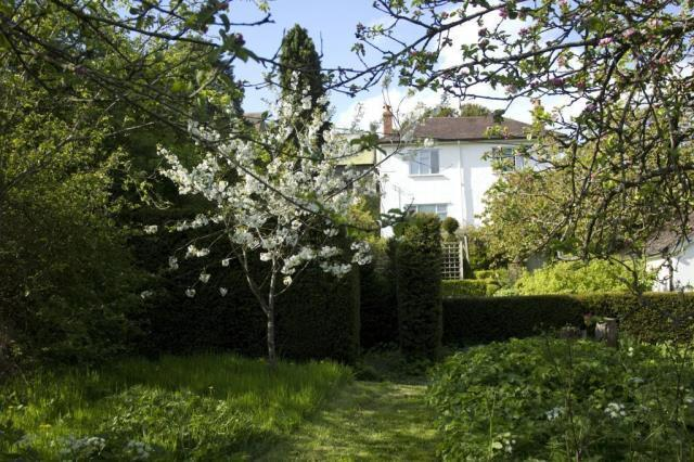 Garden Trees in Blossom
