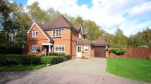 4 bedroom Detached house to rent in Kings Ride, Ascot, SL5