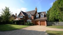 5 bed Detached home to rent in Burleigh Road, Ascot, SL5