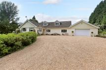 5 bed Detached property in Four Marks, Alton...