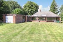 Detached Bungalow for sale in Hattingley, Alton...