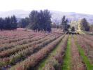 property for sale in Araucanía, Villarrica
