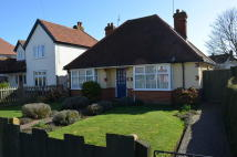 Detached Bungalow for sale in Links Avenue, Felixstowe