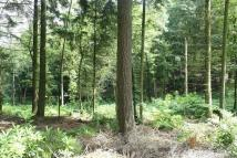 Pasturewood Road Land for sale