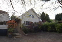 Welwyn house to rent