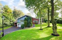 5 bedroom Detached home in Longacres...