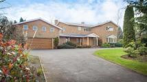 8 bedroom Detached property in Squirrel Walk...