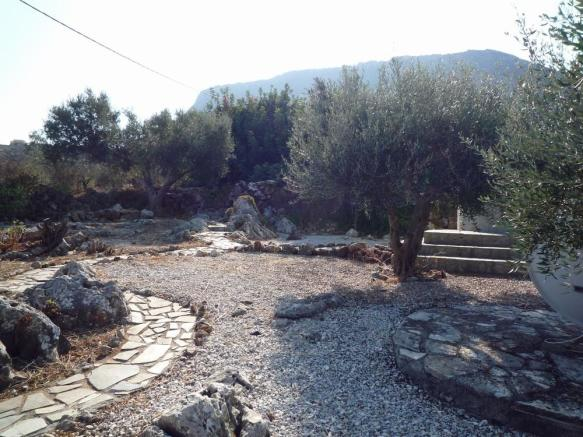 View of olive trees