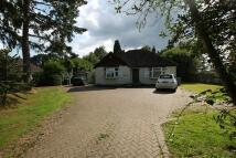 3 bed Detached Bungalow for sale in Broadbridge Lane...