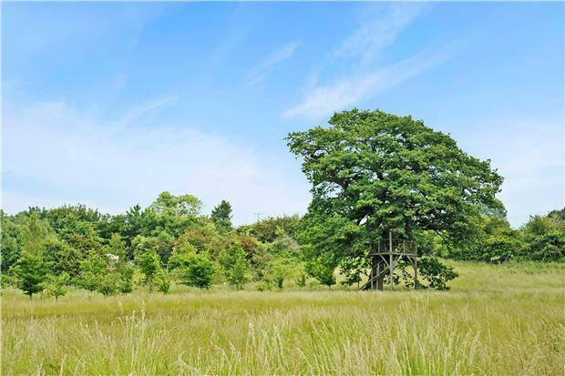 Listed Oak Tree