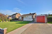 Detached Bungalow in Hannant Road...