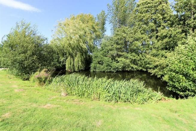 Willow Tree 300dpi-3