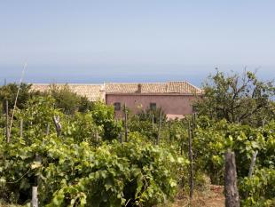 House view from vineyard