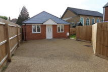 Detached Bungalow to rent in Cobbold Road