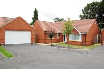 3 bed Detached Bungalow for sale in Springwood Drive...