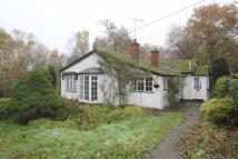 2 bed Detached Bungalow in Danbury