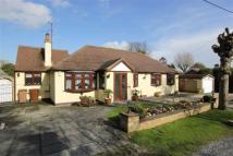 Detached Bungalow for sale in Little Baddow