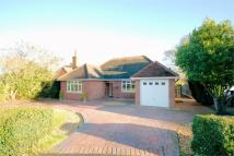 3 bedroom Detached Bungalow in Wavenham Close...